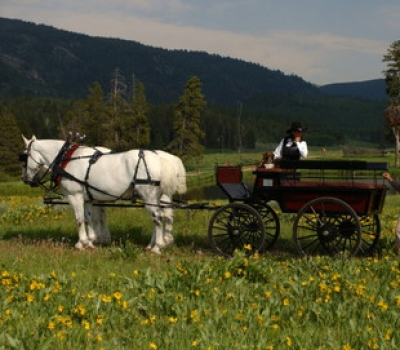 Carriage Ride to Wedding Ceremony